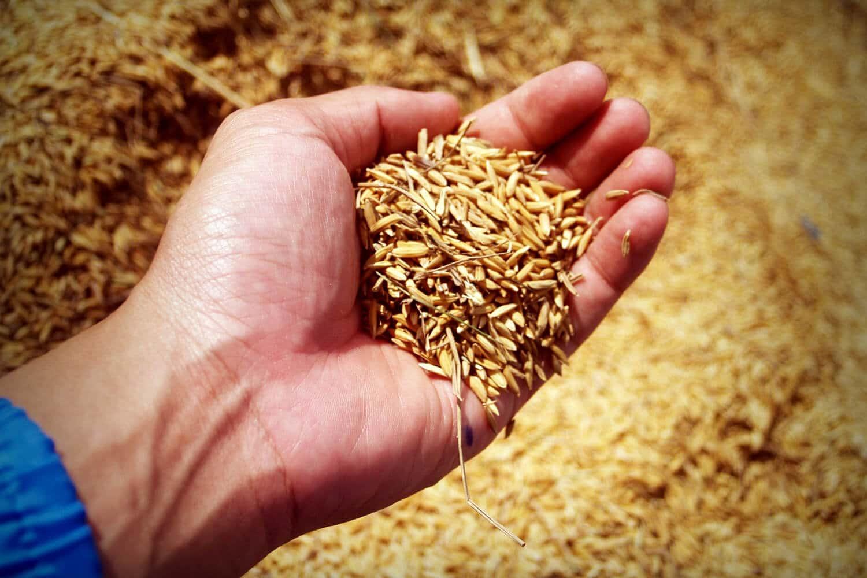 Landwirtschaft (Symbolbild)